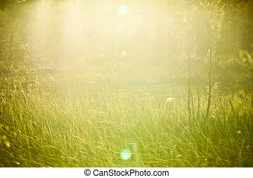 gras, zonlicht
