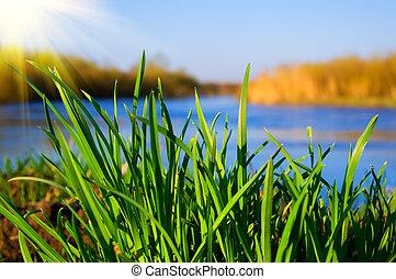 gras, zonnig, groene rivier, dag, bank
