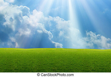 Grasland - Grassland with blue sky and sunlight background