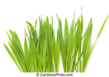 grass., 若い, 大麦