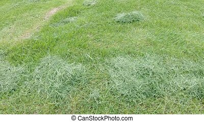 Grass after mowing the lawn