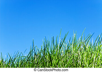 grass against sky - grass from below against a serene blue...