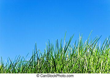 grass against sky - grass from below against a serene blue...