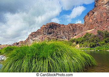 Grass along John Day River in Central Oregon