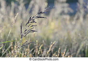 Grass an meadow background