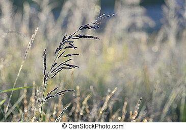 Grass an meadow background