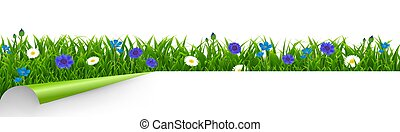 Grass And Blue Flowers Border White Background