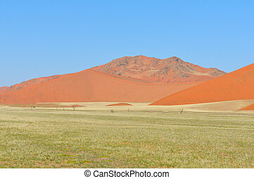 Grass and dune landscape near Sossusvlei, Namibia