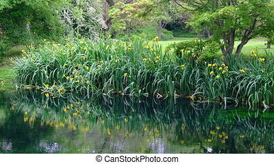 grass and flower reflections on water on river shore...