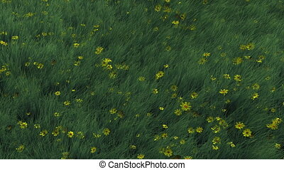 Grass and Flowers Blowing in Wind