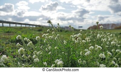 grass and flowers grow near the road traffic traffic of...