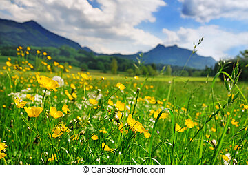 Grass and flowers in the Alpine meadow