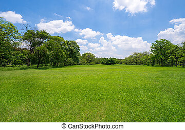 Grass and green trees in beautiful park under the blue sky