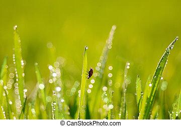 Grass and ladybird