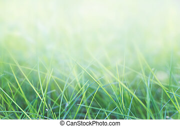 grass and natural green background with selective focus