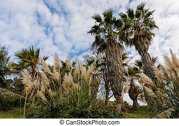 grass and palm trees