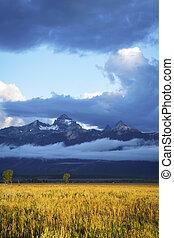 Grass and sagebrush fields, grand Teton national Park - ...