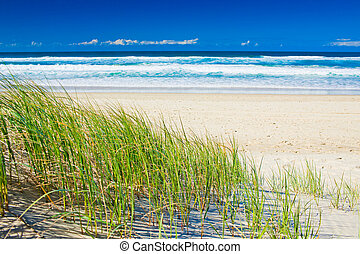 Grass and sandy beach on sunny day of Gold Coast Queensland