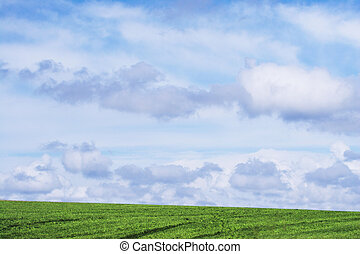 Grass and sky - A wonderful sky and bright green grass