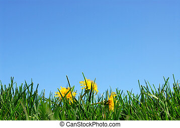 Background of grass and cloudless blue sky