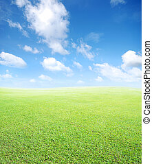 grass and sky background - green field and blue sky