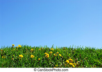Grass and sky background - Background of grass and sky