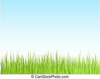 Grass and sky  - Grass against blue sky