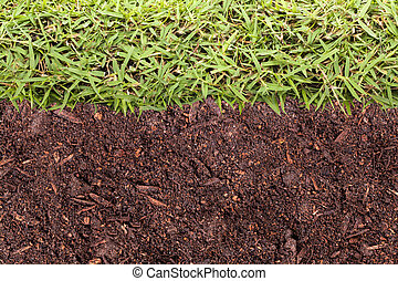 Grass and soil texture