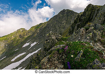 grass and some purple flowers on a rocky cliffs of Fagaras...