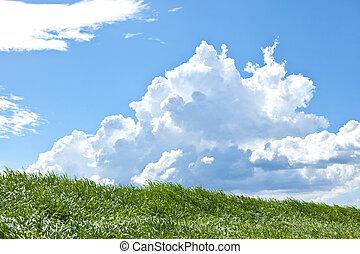 Grass and summer thunderhead