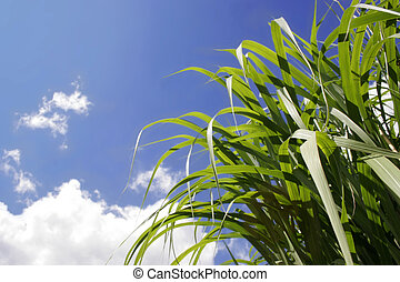grass and sunny sky