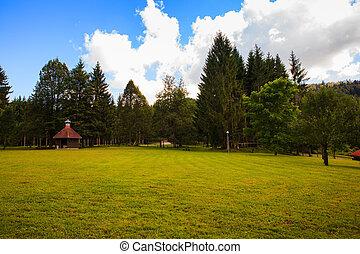 Grass and trees Ko?evski Rog or Ko?evje Rog - Grass and...