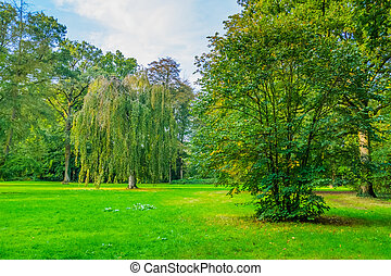 grass area with beautiful trees in the liesbos forest of breda, The Netherlands, green meadow in the woods