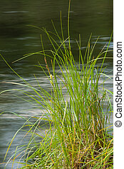 Grass at river's edge
