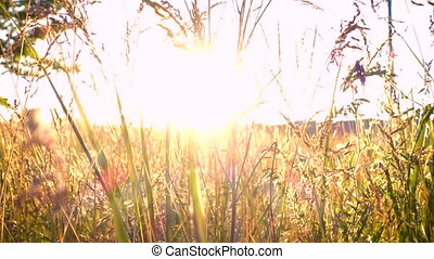 grass at the meadow and sunlight abstract background