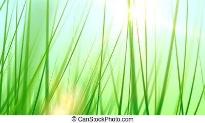 Grass Background 02 (30fps)