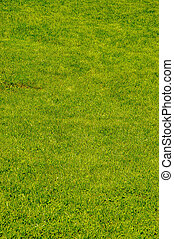 Grass background - Abstract green grass background
