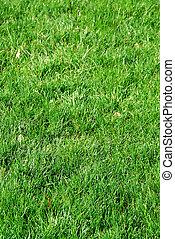 Grass background - Background of fresh green grass