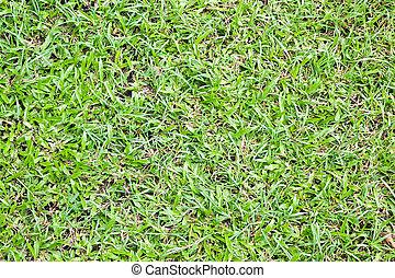 Grass background, Fresh lawn grass texture.