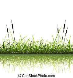 Grass Background - Grass and Reeds with Reflection in Water