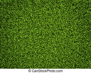 Grass Background - Grass background, fresh green soccer turf...