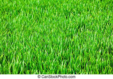 Grass background  - Grass background