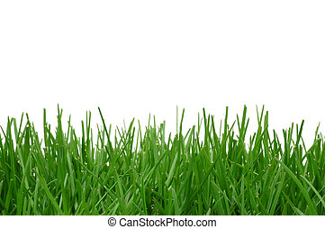 Grass isolated on a white background. White area great for added text.