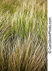 Grass background in Summer