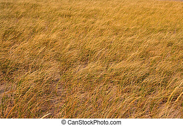 Grass background shot in dry grass lands