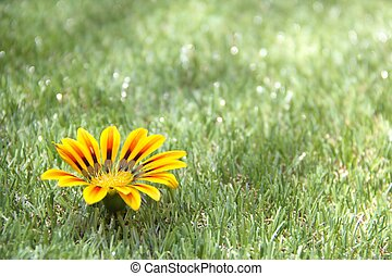 Grass background with a flower