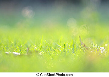 Grass background with bokeh for background design