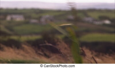 Grass being blown by the winds - A focused shot of a grass...