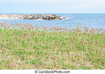 Grass beside the sea