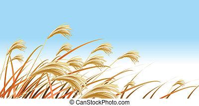 Grass Blades against Blue sky